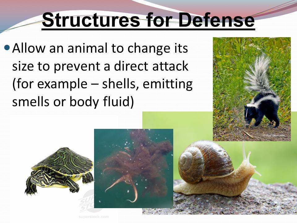 6 L 4B 2 STRUCTURAL ADAPTATIONS FOR DEFENSE, MOVEMENT