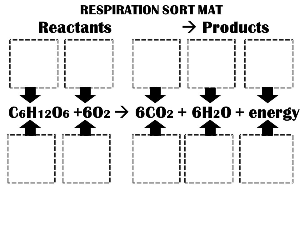 6l5b2 Photosynthesis Respiration Transpiration South